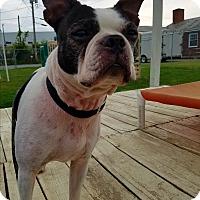 Adopt A Pet :: THOMAS - New Windsor, NY