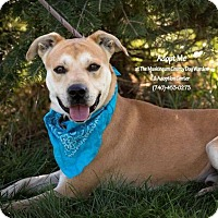 Adopt A Pet :: Chevy - ADOPTED! - Zanesville, OH