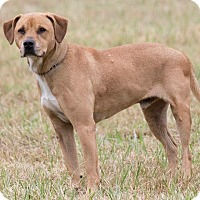 Adopt A Pet :: Buddy - Broken Arrow, OK