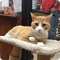 Adopt A Pet :: Charlie - Colmar, PA