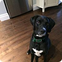 Adopt A Pet :: JD *Adoption Pending* - Guelph, ON