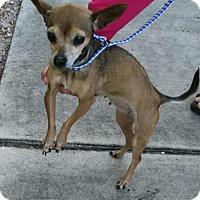 Adopt A Pet :: Lizzy - Maquoketa, IA