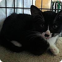 Adopt A Pet :: Louie (KL) - Little Falls, NJ