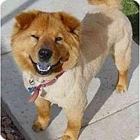 Adopt A Pet :: Toffee - Scottsdale, AZ