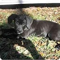 Adopt A Pet :: Naomi - Albany, GA