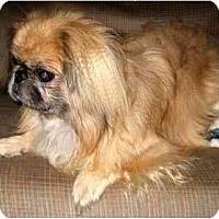 Adopt A Pet :: Gabe - Mays Landing, NJ