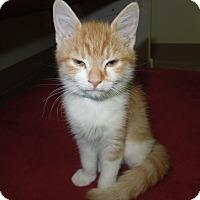 Adopt A Pet :: Kyle - Medina, OH