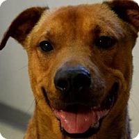 Adopt A Pet :: RUPERT - Decatur, GA
