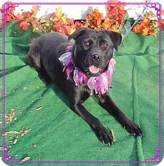 Labrador Retriever Mix Dog for adoption in Marietta, Georgia - NAOMI (R)