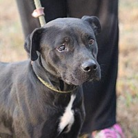 Adopt A Pet :: LILLY - McKenzie, TN