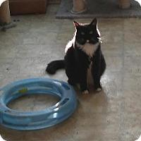 Adopt A Pet :: LaChoy-$35.00 - Buford, GA