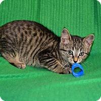 Adopt A Pet :: amber - Buford, GA