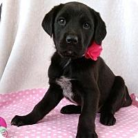 Adopt A Pet :: April - Newark, DE