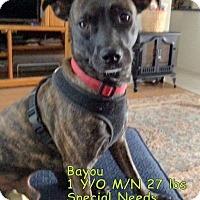 Adopt A Pet :: Bayou - Englewood, FL