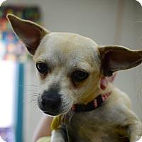 Adopt A Pet :: Mimi - Greenwood, SC