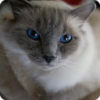 Adopt A Pet :: Mooch - Wilmington, NC
