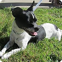 Adopt A Pet :: Sparky - Winchester, CA