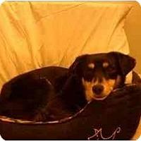 Adopt A Pet :: Queenie - Alexandria, VA
