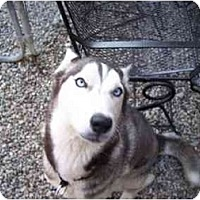 Adopt A Pet :: Zeta - Belleville, MI