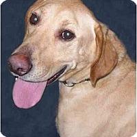Adopt A Pet :: Georgie - New York, NY