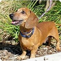 Adopt A Pet :: Burt - San Jose, CA
