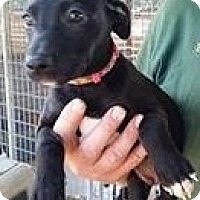 Adopt A Pet :: Kit Fox - Gainesville, FL