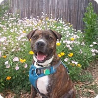 Adopt A Pet :: Jewels - San Antonio, TX
