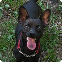 Adopt A Pet :: Billy - Ormond Beach, FL