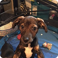 Adopt A Pet :: Reece - Grand Rapids, MI