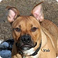 Adopt A Pet :: Koda - Idaho Falls, ID
