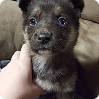 Adopt A Pet :: DAKOTA - Winnipeg, MB