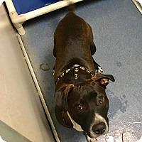 Adopt A Pet :: Circle K - Jupiter, FL