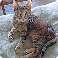 Adopt A Pet :: Phryne - Mississauga, Ontario, ON
