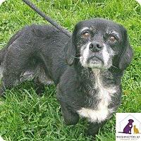 Adopt A Pet :: Winnie - Eighty Four, PA