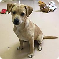Adopt A Pet :: Joe - Allentown, PA