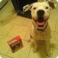 Adopt A Pet :: Mushball Marshall - Madison, NJ
