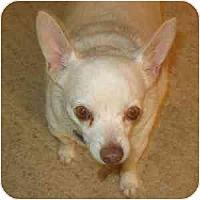 Adopt A Pet :: George - Phoenix, AZ