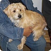 Adopt A Pet :: Abel - Hamilton, ON