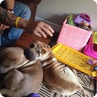 Adopt A Pet :: Wonton - Tillsonburg, ON