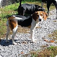 Adopt A Pet :: Paula - Hazard, KY