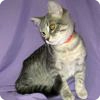 Adopt A Pet :: Haiden - Powell, OH