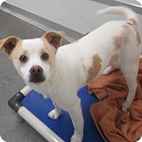 Adopt A Pet :: Barney - Holton, KS