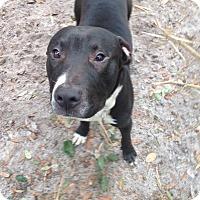 Adopt A Pet :: Hatfield - Groveland, FL