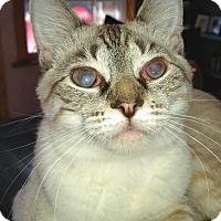 Adopt A Pet :: Zombie - Knoxville, TN