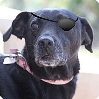 Adopt A Pet :: Captain Jack - Toronto, ON