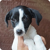 Adopt A Pet :: Jewel - Oviedo, FL