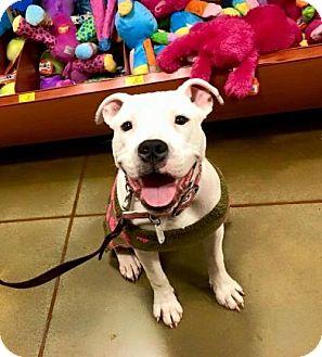 Pit Bull Terrier Mix Dog for adoption in Charlotte, North Carolina - Midge