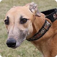 Adopt A Pet :: Omerta Berta - Carol Stream, IL