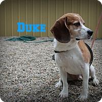 Adopt A Pet :: Duke - Muskegon, MI