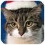 Photo 2 - Domestic Shorthair Cat for adoption in Centerburg, Ohio - Emmie